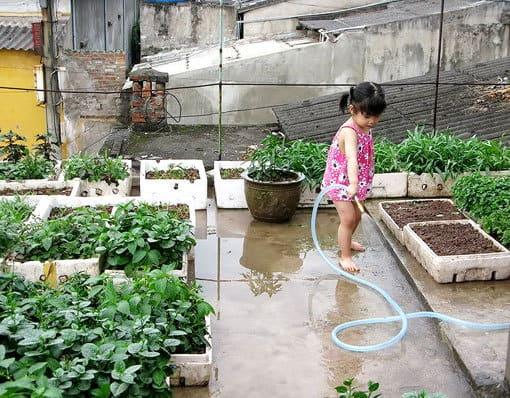 trồng rau tại nhà