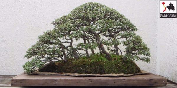 bonsai ở Trung Quốc