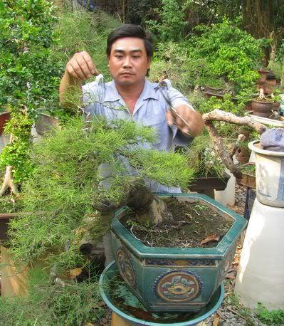 bón phân cho bonsai