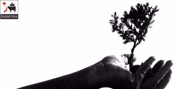 ghép bonsai linh sam