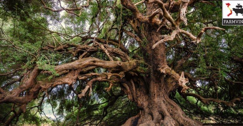 cây cảnh dáng