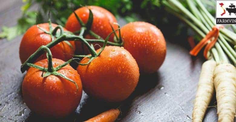 cách trồng cà chua