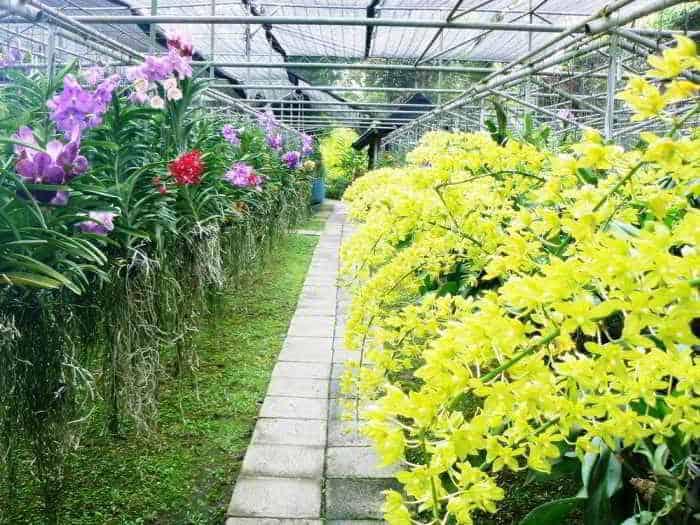 tiêu thụ phong lan