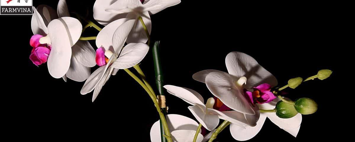 tưới nước cho hoa lan