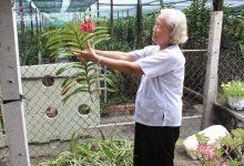 vườn lan cắt cành