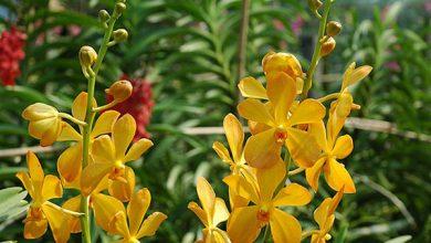 hoa lan cắt cành