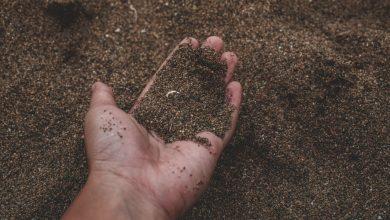 cải tạo vườn rau