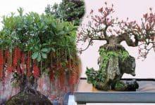 chẻ rễ