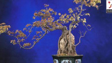 uốn cành rơi