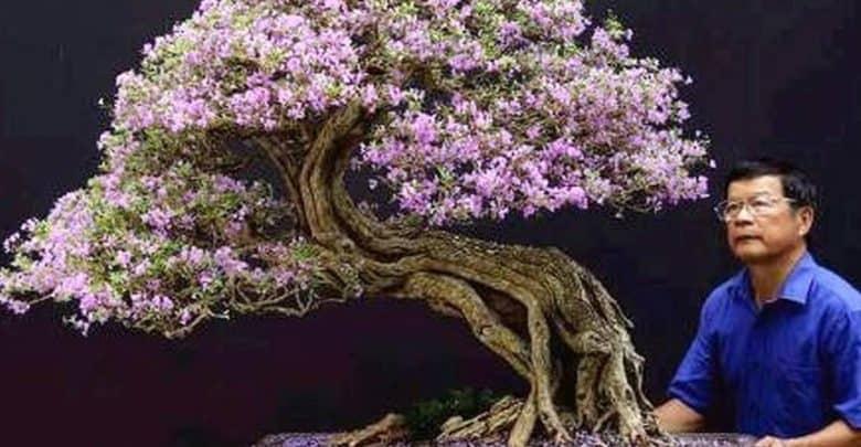 cây linh sam