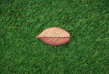 cỏ vườn
