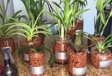 trồng lan thuỷ canh