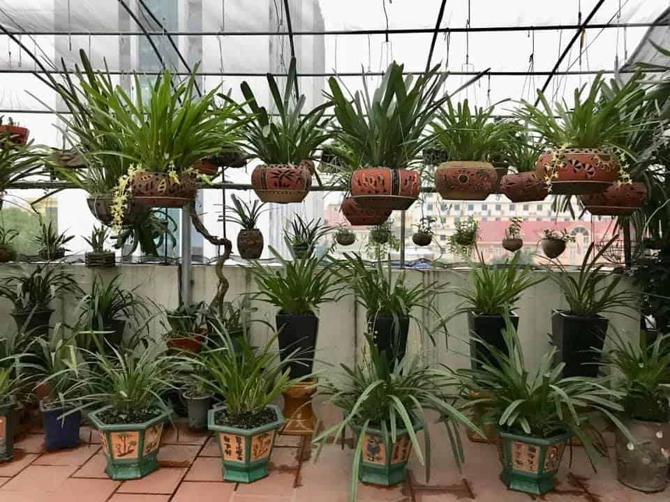 Học trồng lan