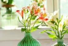 Hoa thuỷ tiên