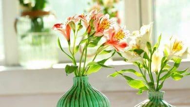 giữ nước cho hoa