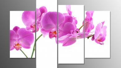 hoa lan trong tranh phong thủy